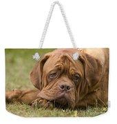 Dogue De Bordeaux Weekender Tote Bag