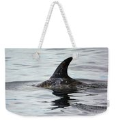 Dolphin In Monterey Weekender Tote Bag