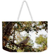Dove In Autumn Oak Tree Lower Lake Ca Weekender Tote Bag