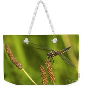 Dragonfly On Seed Pod 2 Weekender Tote Bag