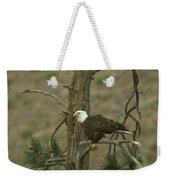 Eagle On A Tree Branch Weekender Tote Bag