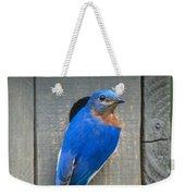 Eastern Bluebird At Nest Weekender Tote Bag