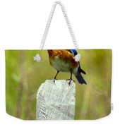 Eastern Bluebird Pose Weekender Tote Bag
