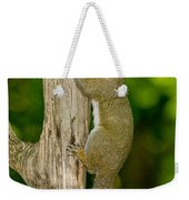 Eastern Gray Squirrel Weekender Tote Bag