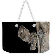 Eastern Screech Owls At Nest Weekender Tote Bag