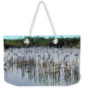 149838-egrets Feeding, Everglades Nat Park  Weekender Tote Bag
