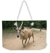 Eland Antelope Out In The Open Weekender Tote Bag