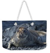 Elephant Seal Pup... Weekender Tote Bag