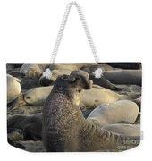 Elephant Seals Weekender Tote Bag by Bob Christopher