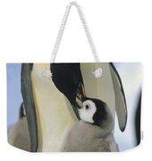 Emperor Penguin Parent Feeding Chick Weekender Tote Bag
