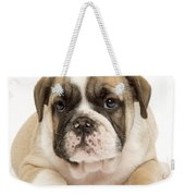English Bulldog Puppy Weekender Tote Bag
