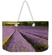 English Lavender Near Alton In Hampshire Weekender Tote Bag