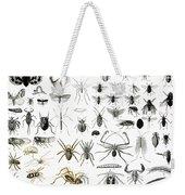 Entomology Myriapoda And Arachnida  Weekender Tote Bag