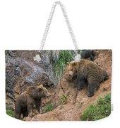Eurasian Brown Bear 17 Weekender Tote Bag