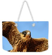 Eurasian Hobby Falco Subbuteo In Weekender Tote Bag