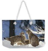 Eurasian Lynx Pair Bayerischer Wald Np Weekender Tote Bag