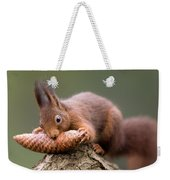Eurasian Red Squirrel Biting Cone Weekender Tote Bag by Ingo Arndt