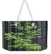 European Beech Tree In Noway Spruce Weekender Tote Bag