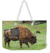 European Bison 4 Weekender Tote Bag