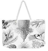 Examples Of Coniferae From Kunstformen Weekender Tote Bag