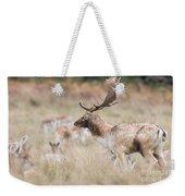Fallow Deer Buck Weekender Tote Bag