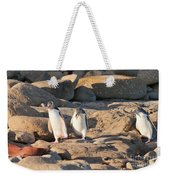 Family Of Nz Yellow-eyed Penguin Or Hoiho On Shore Weekender Tote Bag