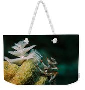 Feeding Worms Weekender Tote Bag