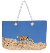 female and young Nubian Ibex Weekender Tote Bag