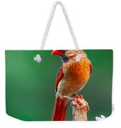 Female Cardinal Posing Pretty  Weekender Tote Bag
