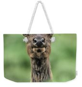 Female Elk Portrait Yellowstone National Park Wyoming Weekender Tote Bag