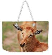 Female Impala Weekender Tote Bag