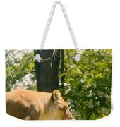 Female Lion On The Move Weekender Tote Bag