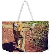 Female Lion Walking. Ngorongoro In Tanzania Weekender Tote Bag