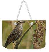 Female Redwing Blackbird Weekender Tote Bag