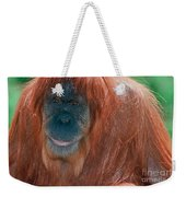 Female Sumatran Orangutan Weekender Tote Bag