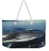 Fin Whale In Sea Of Cortez Weekender Tote Bag