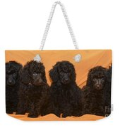 Five Poodle Puppies  Weekender Tote Bag