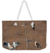 Five White-tailed Kite Siblings Weekender Tote Bag