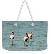 Flamingos Gathering Together Weekender Tote Bag