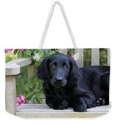 Flat-coated Retriever Puppy Weekender Tote Bag