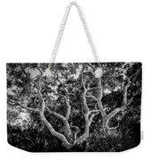 Florida Scrub Oaks Bw   Weekender Tote Bag