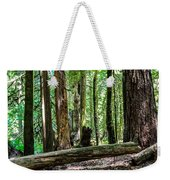 Forest Of Cathedral Grove Collection 2 Weekender Tote Bag