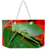 Fork-tailed Bush Katydid Weekender Tote Bag