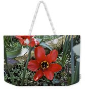 Fosteriana Tulips Red Emperors Weekender Tote Bag