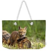 Fox Pup In The Morning Light Weekender Tote Bag
