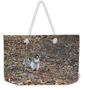 Fox Squirrel Curious Weekender Tote Bag