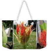 From Bud To Bloom - African Blood Lily Weekender Tote Bag