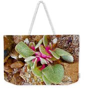 Fuzzy Plant On Blue Mesa Trail In Petrified Forest National Park-arizona  Weekender Tote Bag