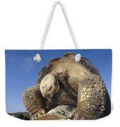 Galapagos Giant Tortoise Mating Alcedo Weekender Tote Bag