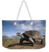 Galapagos Giant Tortoise On Alcedo Weekender Tote Bag